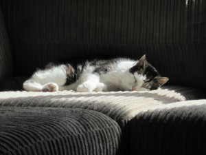 Tabitha, our twenty-one year old cat enjoying the sunshine in the safety of our lounge