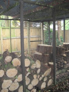The log store at the bottom of the garden complete with drying logs.
